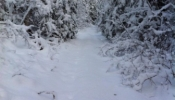 Snowmobiling on the old Pee Dee rail line